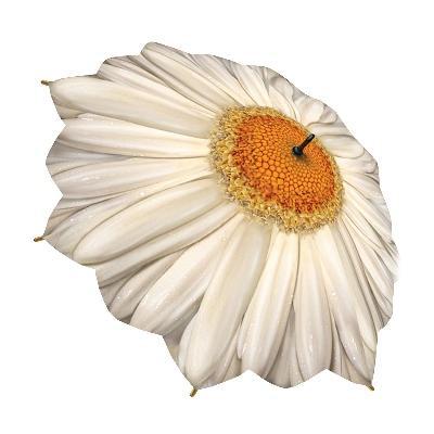 Зонт-трость цветок ромашка galleria